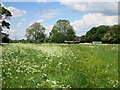 SP8408 : Meadow behind Chiltern Brewery by Des Blenkinsopp