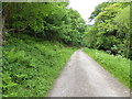 SO5308 : On the Wye Valley Walk between Whitebrook and Redbrook by Jeremy Bolwell