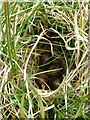 NZ0091 : Snipe's nest with eggs by Russel Wills