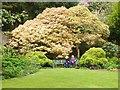 SW8339 : Colourful spring foliage, Trelissick Gardens by Derek Voller