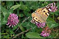 TQ9894 : Painted Lady & Red Clover by Glyn Baker