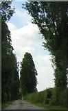 SJ6950 : Driveway to Wybunbury Grange by Christopher Hilton