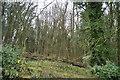 SE3257 : Limekiln Plantation by N Chadwick