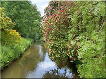 SJ8383 : River Bollin at Quarry Bank Mill Lower Garden by David Dixon
