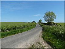 TA3622 : Rysome Lane, Holmpton by Neil Theasby