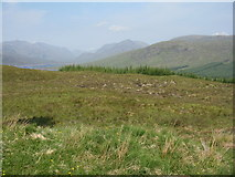 NH1804 : Cluanie and Glenquoich Forests by M J Richardson