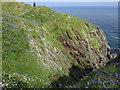SM7830 : Coast Path with flowers at Pwll Caerog by Jeff Gogarty