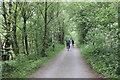 SH7018 : The Mawddach Trail by Jeff Buck