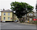 SW7042 : Dominant tree on a Redruth corner by Jaggery