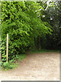 TL9663 : Footpath to the A14 by Adrian Cable