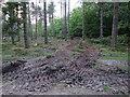 SU4005 : Forestry work, Dibden Inclosure by Hugh Venables