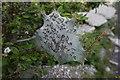 SY6869 : Caterpillars on Portland Bill by Ian S
