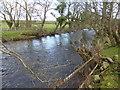 SH4659 : Make-shift fencing on the bank of the Afon Gwyrfai by David Medcalf