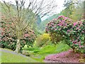 SW7727 : Spring colour at Glendurgan Gardens, Cornwall by Derek Voller