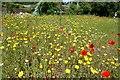 SW6031 : Godolphin House: The British wild flower bed by Michael Garlick