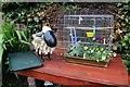 SH8076 : Baabaraa and the birdcage by Richard Hoare