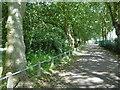 TQ4585 : Avenue of trees in Barking Park by Marathon