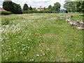 TQ4686 : Wildflower area in Goodmayes Park by Marathon