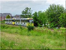 SD7908 : Metrolink Tram near Withins Bridge by David Dixon