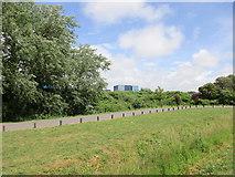 TQ0102 : Boundary bank. Littlehampton Marina by Jonathan Thacker