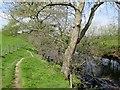 SE2559 : Footpath  to  Birstwith  alongside  River  Nidd by Martin Dawes