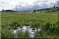 SU9261 : The Folly Bog, Pirbright Ranges by Alan Hunt