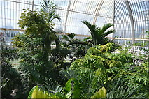 TQ1876 : Canopy view, The Palm House by N Chadwick