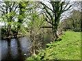 SE2159 : Footbridge  over  the  River  Nidd  (2) by Martin Dawes