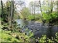 SE2059 : River  Nidd  downstream  from  Darley by Martin Dawes