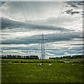 ND1456 : Pylons and cows by Peter Moore