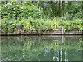 TL3613 : River Lea, Ware, Hertfordshire by Christine Matthews