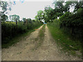 NY1135 : Access track to fields by Graham Robson