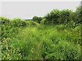 NY1236 : Overgrown track east of Tallentire Hill by Graham Robson