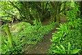 SX8174 : By Liverton Brook by Derek Harper
