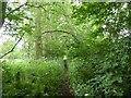SJ8542 : Footpath to Claytonwood Farm by Jonathan Hutchins