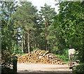 SX9079 : Log Pile in Grammarcombe Wood by Des Blenkinsopp