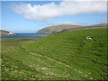 HP6113 : Country at Burrafirth by David Purchase