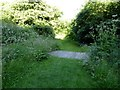 SJ8542 : Path on Ferndown LNR by Jonathan Hutchins