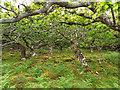 NM3020 : Stunted Oak Wood by Mick Garratt