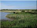 TF7544 : Island Hide, Titchwell RSPB reserve by Hugh Venables