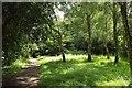SX9166 : Path by St Marychurch Road by Derek Harper