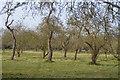 TL4155 : Orchard, Roman Hill by N Chadwick