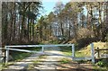 SX1263 : Newbridge Woods by Derek Harper