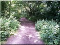 SZ0792 : Talbot Woods: a stretch of footpath A15 in Poole by Chris Downer