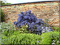 SE3238 : Flowering shrub in Roundhay Park by Schlosser67