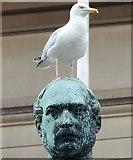 SJ3490 : Herring gull on Prince Albert's head by Mat Fascione