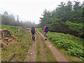 NM4520 : Forest track by Mick Garratt