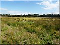 SK4489 : Wetland Bog near the River Rother by Jonathan Clitheroe