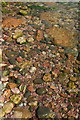 SX9364 : Shingle, Anstey's Cove by Derek Harper