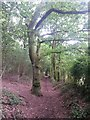 SZ0793 : Talbot Village: a tree overarches footpath N12 by Chris Downer